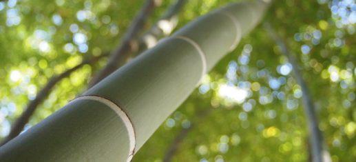 Bedeutung des Tai Chi