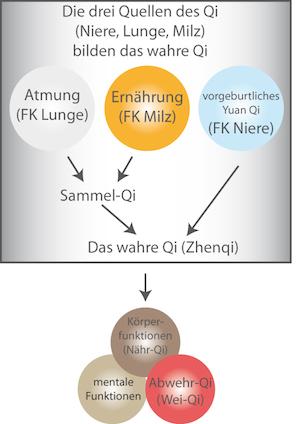 Energiegewinnung: Atmung und Ernährung (nachgeburtliches Qi)
