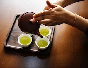 Chinesischer Tee - Camellia sinensis (L.) Kuntze
